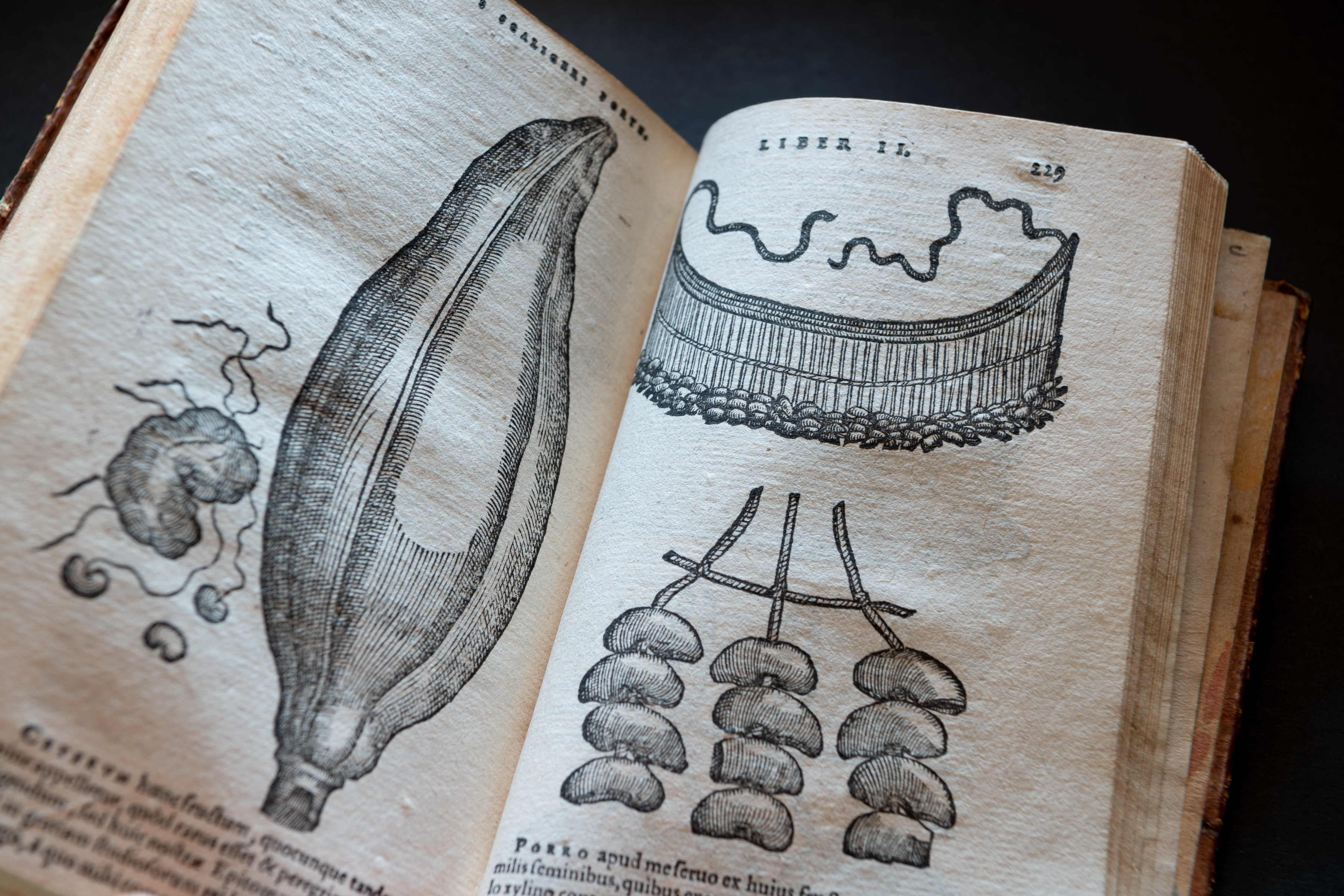 Detail of a printed book shows full-page illustrations of plants. Text in Latin also visible.