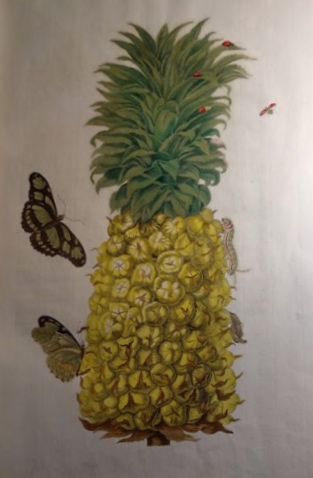 colored image of a pineapple and butterflies