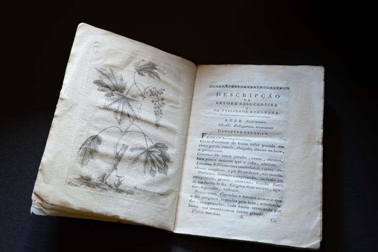"""Detail from a printed title page shows printed drawing of a leafy plant on the left and title """"Descripçaõ da arvore assucareira e da utilidade e cultura"""" on the right."""