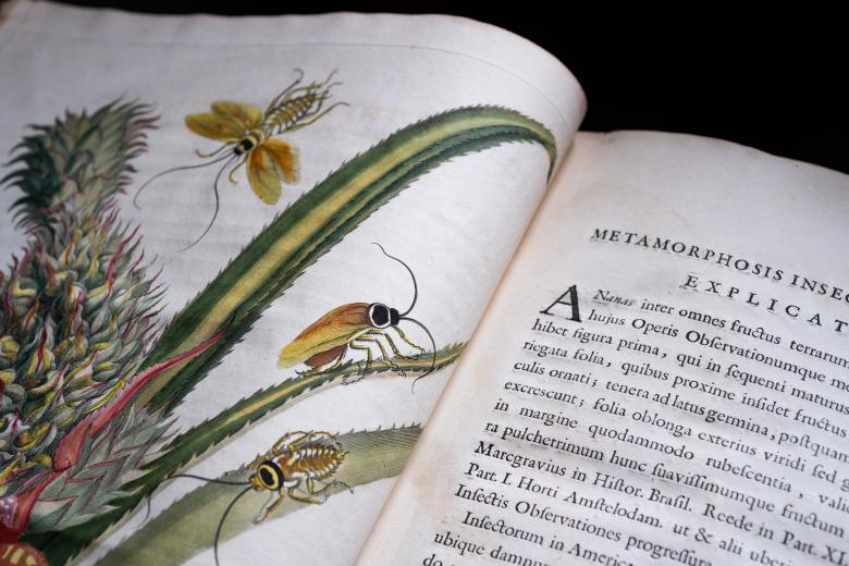 Detail of a printed book shows a full-page colored illustration of a plant with insects on it. On the opposite page, text in Latin is visible.