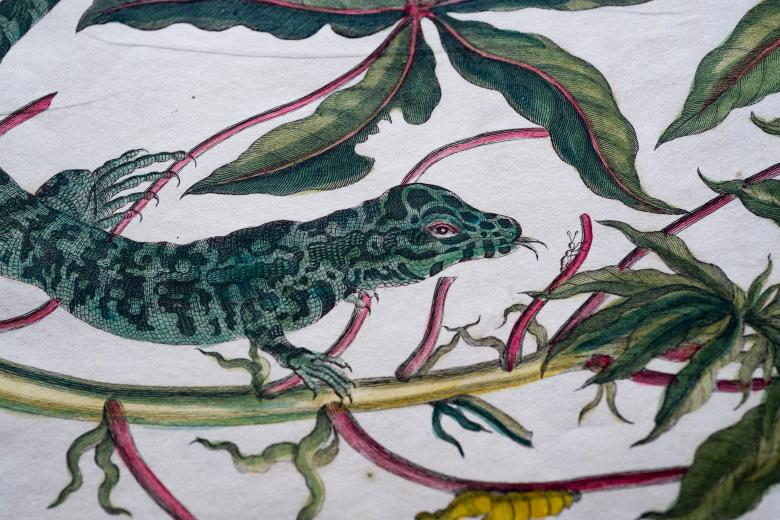 Detail of a printed book shows a full-page colored illustration of a lizard on a plant.