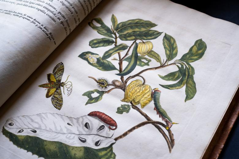 Detail of a printed book shows a full-page colored illustration of a caterpillar, cocoon, and butterfly on or near a plant.