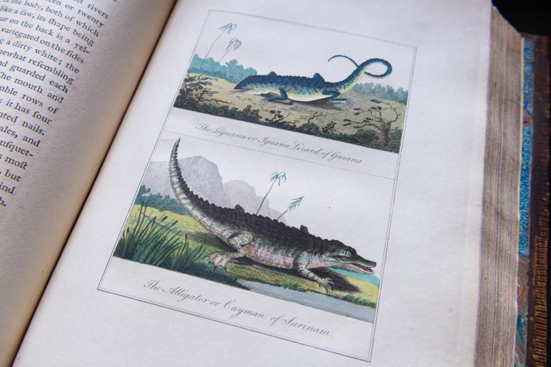 """Engraved, hand colored illustration. Labels in English read [top] """"The Leguana or Iguana Lizard of Guiana, [bottom] """"The Alligator or Cayman of Surinam."""""""