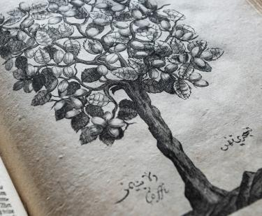 Detail of a printed text shows a large, leafy tree. Labels printed below.