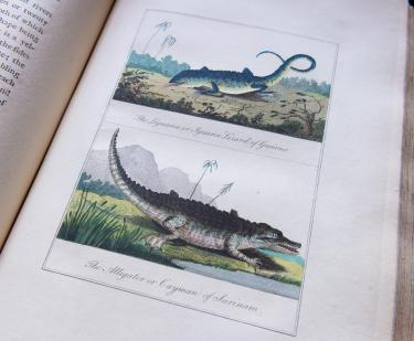 "Engraved, hand colored illustration. Labels in English read [top] ""The Leguana or Iguana Lizard of Guiana, [bottom] ""The Alligator or Cayman of Surinam."""
