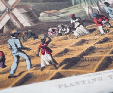 Detail of a hand colored lithograph shows enslaved Black people planting sugar cane in an open field.
