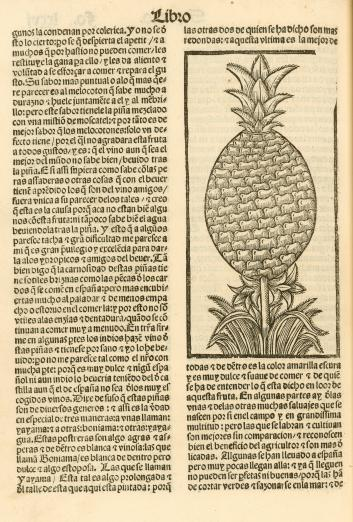 printed text in Spanish with an image of a pineapple