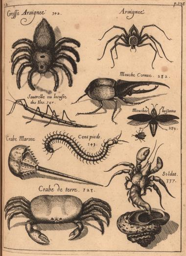 Engraved plate depicting the insects, spiders, and crabs of Guadeloupe