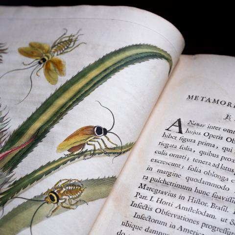 image of an open book with a colorful image of insects on a tropical plant and printed text